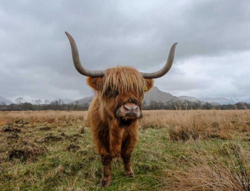 2 semaines en Écosse  : itinéraire, location de voiture, budget…