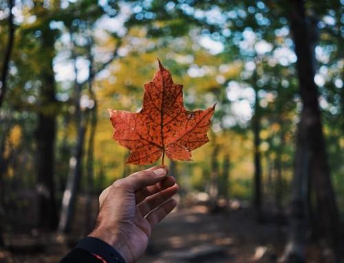 Quels produits de beauté ramener du Canada?