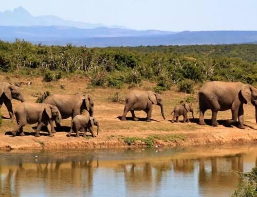 Pourquoi les safaris éthiques ont le vent en poupe
