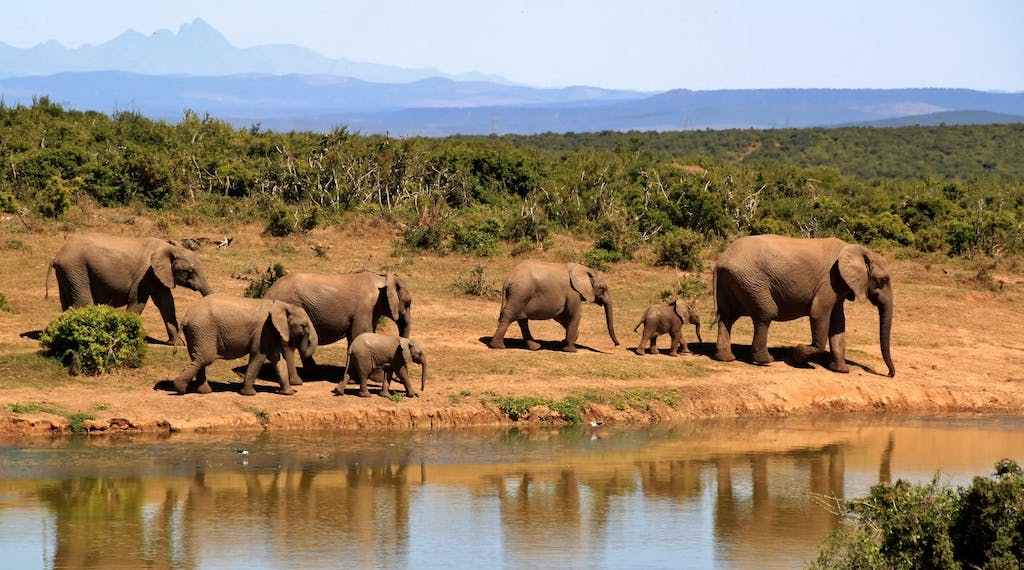 safari ethique afrique